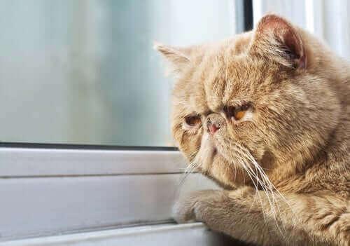 depresyonda kedi