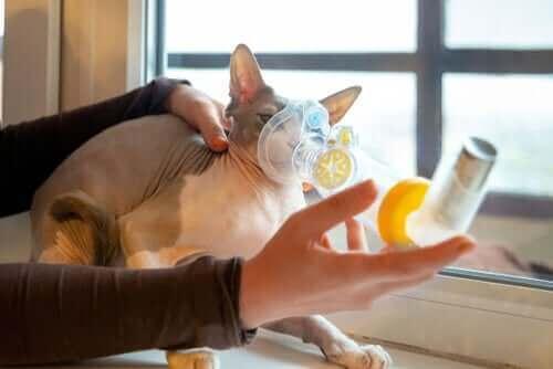 Kedilerde Solunum Yolu Sorunları: Sebepleri