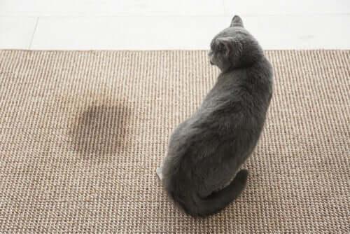 Kedinizin İdrar Kokusundan Nasıl Kurtulunur