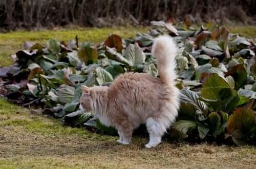 çis yapan kedi