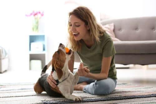 Köpeği ile oyun oynayan bir kişi.