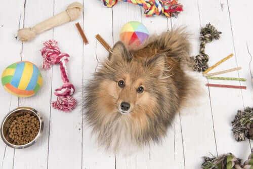 Koronavirüs Krizi Sırasında Evcil Hayvanlarımızı Eğlendirmek İçin İpuçları