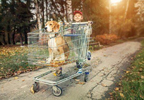 safkan köpek almak