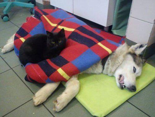 kaza geçiren köpek ve kedi