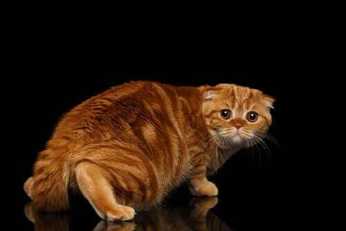 Kedilerin Korkularını Yenmesine Nasıl Yardımcı Olunur