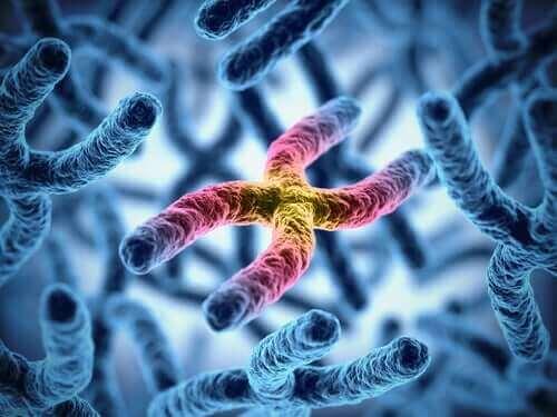 renkli kromozom sarmalı ve büyük köpekler