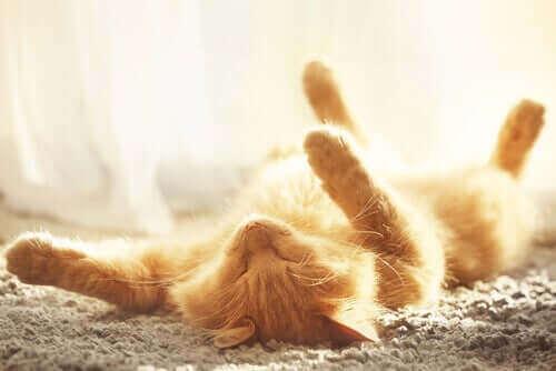 Kedinizi Yazın Serinletmenin Yolları
