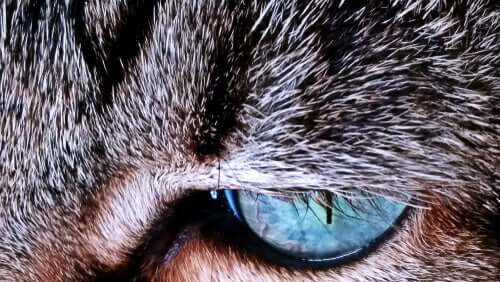 Kedi Kürkü – Neden Renk Değiştirir?