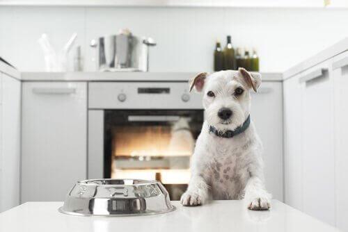 mutfakta mama bekleyen köpek