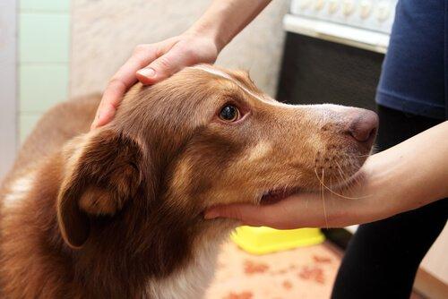 Köpeğiniz Nöbet Geçirirse Ne Yapmalı?
