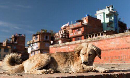 Çevre Kirliliği Köpeğinizi Nasıl Etkiliyor?