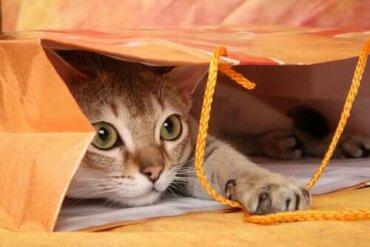 Kedinizi Oyun Oynamaya Teşvik Etmek İçin 7 Basit Yöntem