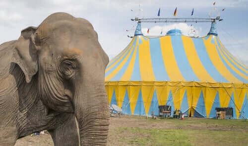 sirkteki mutsuz fil