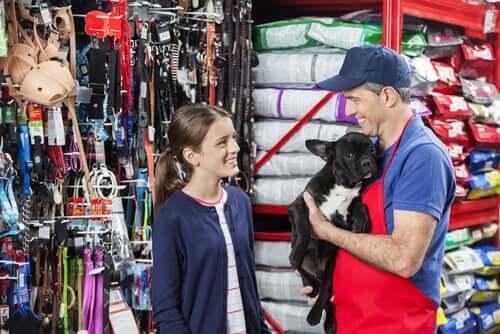 evcil hayvan dükkanı ve sahiplenmek veya satın almak