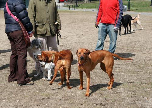 köpekler sosis yiyor