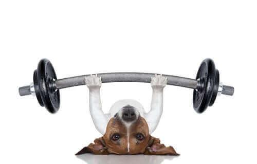 egzersiz yapan köpek
