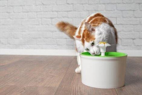 su içen kedi
