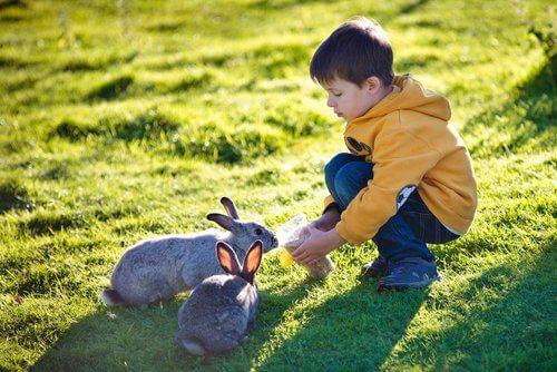 Çocuk tavşanı besliyor
