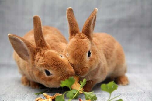 Tavşanlar için Tehlikeli Olan Yiyecekler