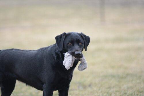 Köpeğiniz için Tehlikeli Nesneler