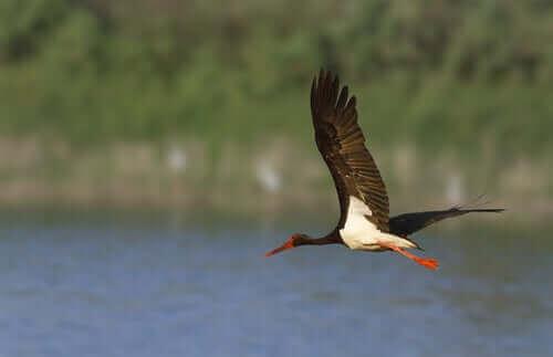 su üzerinde uçan kuş