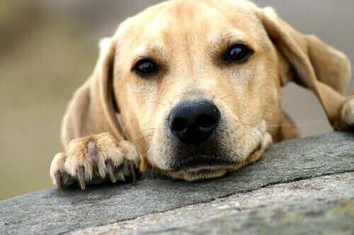 üzgün köpek uzaklara bakıyor