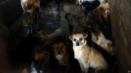 venezuela'daki sokak hayvanları