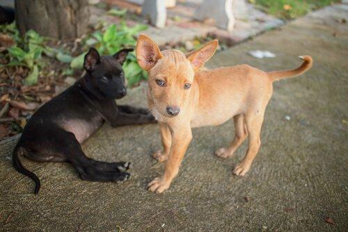 Kıtlık Sonrası Venezuela'daki Evcil Hayvanlar