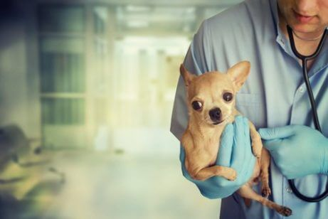 tedavi olan köpek