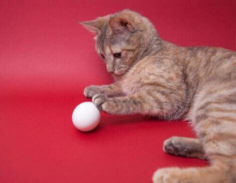 kanserli kedi ve yumurta
