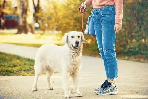 Köpeğini yürüyüşe çıkarmış bir kişi.