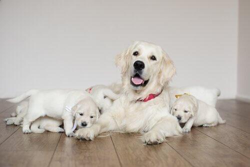 Köpeğinizin Doğum Sonrası Bakımı İçin 5 İpucu