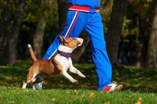 sahibiyle egzersiz yapan köpek