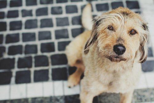 Köpeğinizi Grip Karşısında Korumak