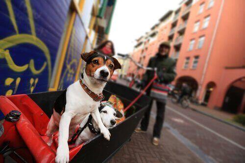 iki köpek şehirde etrafa bakıyor
