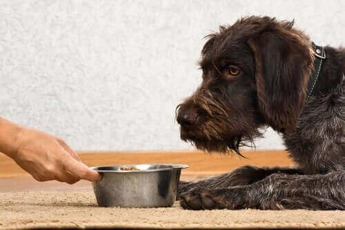 köpeklerde iştahsızlık
