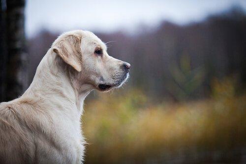 Köpeklerde Kalp Hastalığı Nasıl Tanınır?
