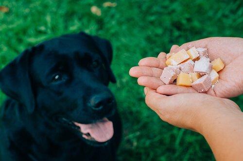 sahibi köpeğini besliyor