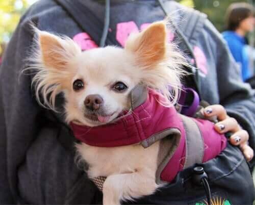 İspanya'daki Köpekleri Sahiplenen Diğer Ülkeler