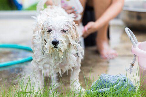köpek yıkamak