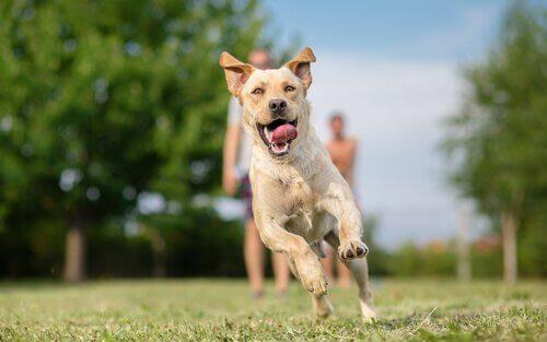 Hapishaneler İçin Köpek Terapisi