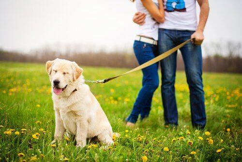 mutlu köpek ve çift