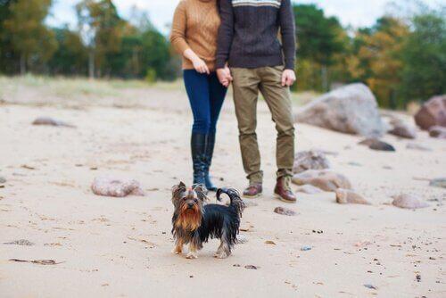 Köpeğim Neden Sevgilimi Kıskanıyor?