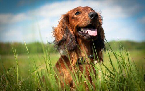 Bir Köpek Sahiplenmek İçin 5 Neden