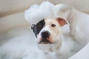 banyo yapan köpek