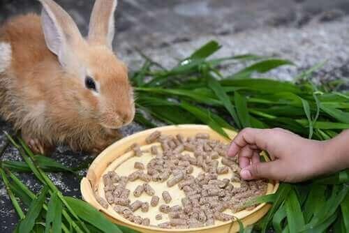 tavşanlarda anoreksi