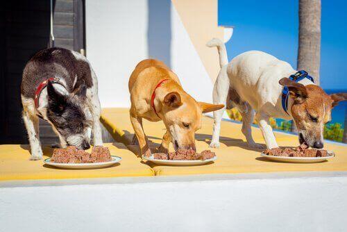 üç köpek mama yiyor
