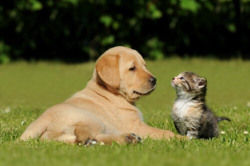 Uygun Köpek veya Kediyi Seçmemenin Tehlikeleri