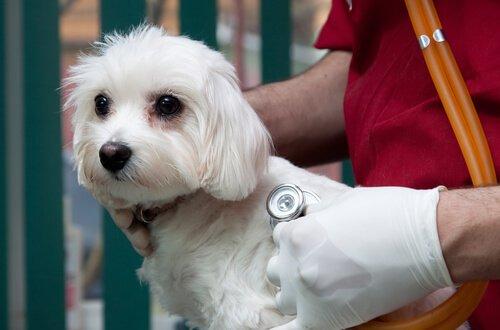 veterinerdeki köpek