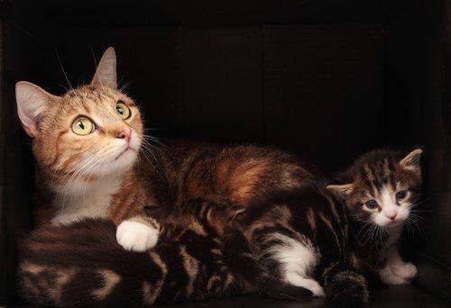 anne ve yavru kediler ve kedilerde doğum